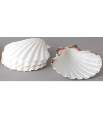 Harold Imports Natural Baking Shells Set of 4