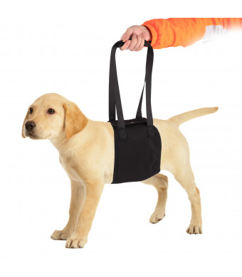 PetAZ Dog Lift Harness Portable Support Rehabilitation for Disable, Injured, Elderly Pet with Weak Legs, Help with Mobility