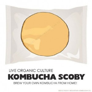 Organic Kombucha Scoby - Live Culture