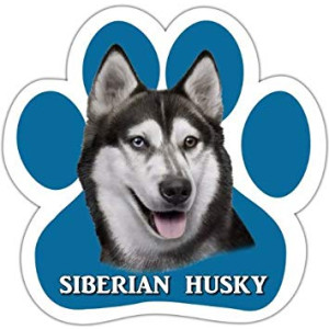 Siberian Husky Car Magnet With Unique Paw Shaped Design Measures 5.2 by 5.2 Inches Covered In UV Gloss For Weather Protection