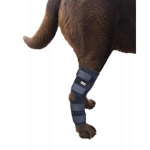 Labra Extra Supportive Dog Canine Rear Leg Hock Joint Wrap Protects Wounds as They Heal Compression Brace Heals and Prevents Injuries and Sprains Helps Arthritis ...